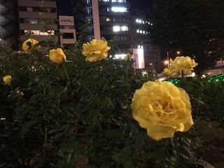 夜5.JPG